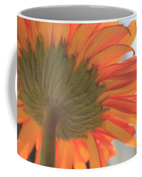 Gerber Daisy Coffee Mug featuring the photograph Bright And Sunny by Deborah Crew-Johnson