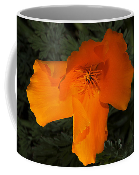 Poppy Coffee Mug featuring the photograph Bright California Poppy by Phyllis Denton