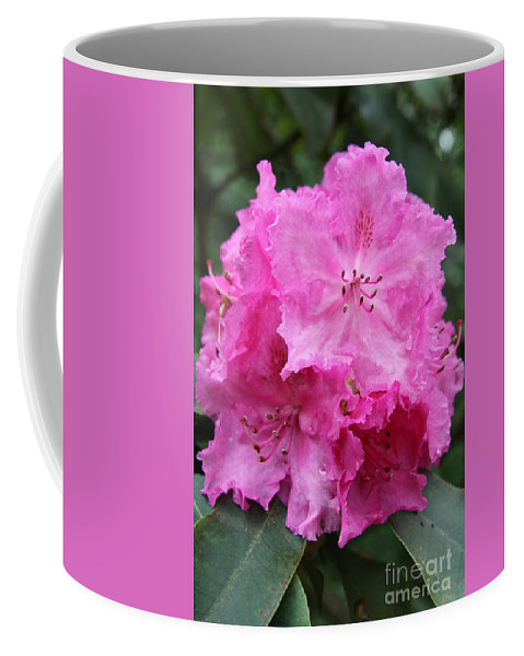 Rhododendron Coffee Mug featuring the photograph Bright Pink Blossoms by Christiane Schulze Art And Photography