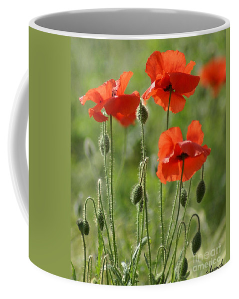 Poppies Coffee Mug featuring the photograph Bright Poppies 1 by Carol Lynch