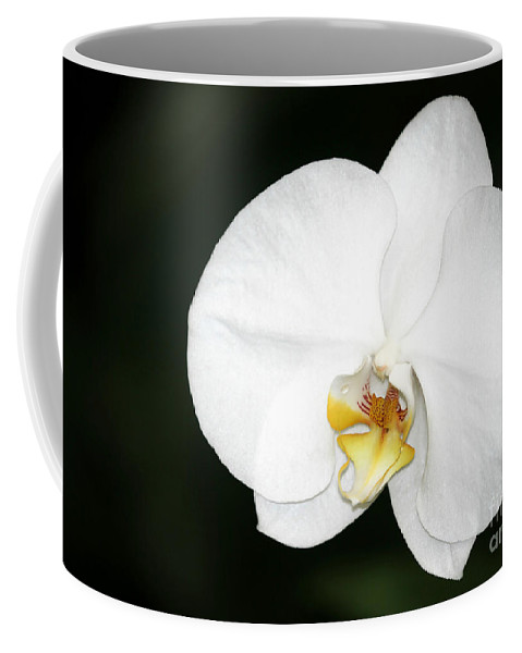 American Coffee Mug featuring the photograph Bright White Orchid by Sabrina L Ryan