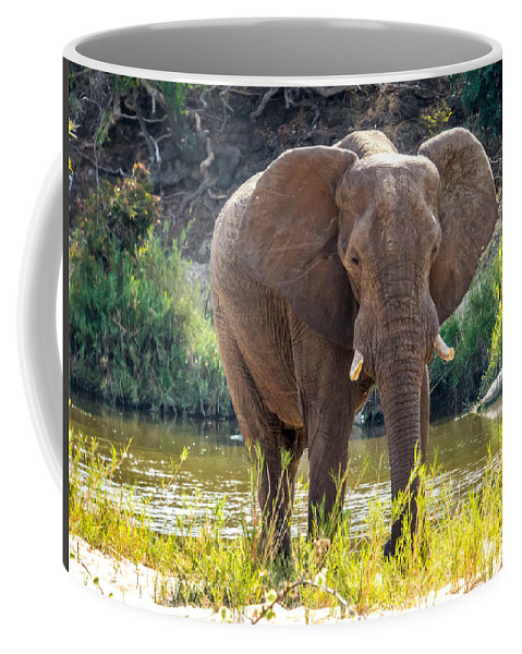 South Africa Coffee Mug featuring the photograph Brilliant Elephant by DAC Photography