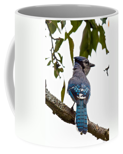 Blue Jay Cyanocitta Crostata Coffee Mug featuring the photograph Bringing Food Back To The Nest by Kristin Hatt