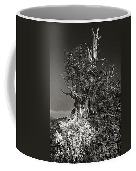 North America Coffee Mug featuring the photograph Bristlecone And Wildflowers In Black And White by Dave Welling