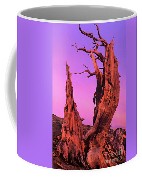 Bristlecone Coffee Mug featuring the photograph Bristlecone Pine At Sunset White Mountains Californa by Dave Welling