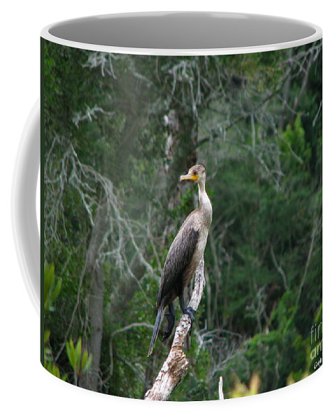 Patzer Coffee Mug featuring the photograph Bristol Cormorant by Greg Patzer