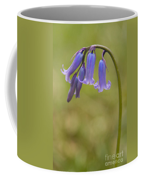 Bluebell Coffee Mug featuring the photograph British Bluebell Hyacinthoides Non Scripta. by Liz Leyden