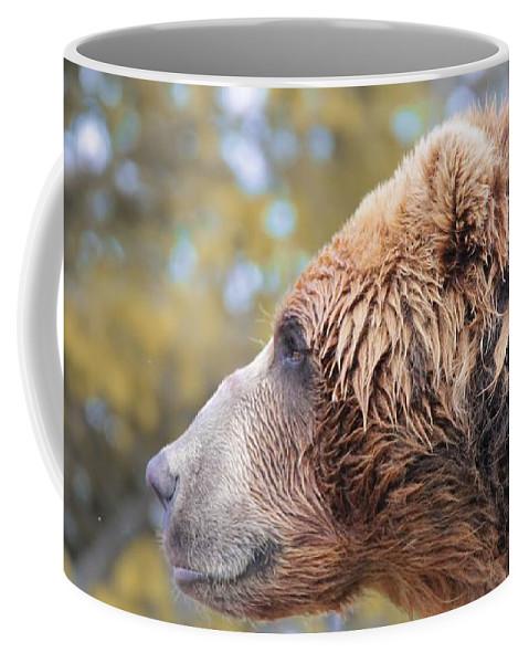 Brown Bear Portrait In Autumn Coffee Mug featuring the photograph Brown Bear Portrait In Autumn by Dan Sproul