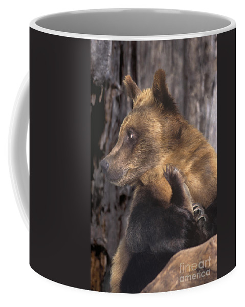 Brown Bear Coffee Mug featuring the photograph Brown Bear Tackles An Itchy Foot Endangered Species Wildlife Rescue by Dave Welling