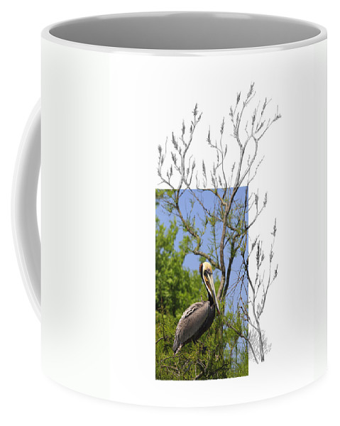 Brown Pelican Coffee Mug featuring the photograph Brown Pelican by Andrew McInnes