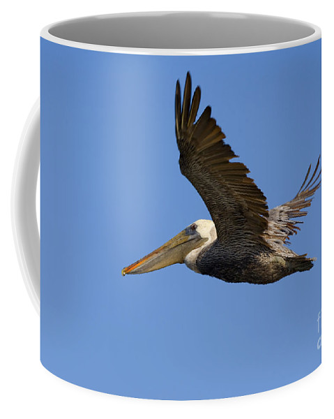 Pelican Coffee Mug featuring the photograph Brown Pelican Flight by Mike Dawson