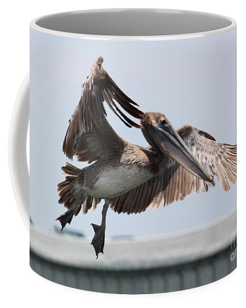 Pelican Coffee Mug featuring the photograph Brown Pelican Landing by Carol Groenen