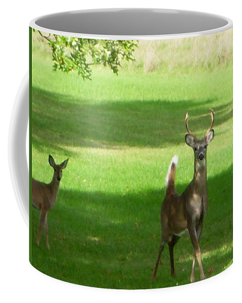 Deer Coffee Mug featuring the photograph Buck And Doe by Aimee L Maher ALM GALLERY