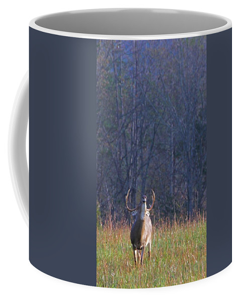 Buck In The Rut Coffee Mug featuring the photograph Buck In The Rut by Dan Sproul