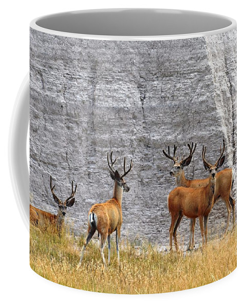 Wildlife Coffee Mug featuring the photograph Bucks Abound by Deanna Cagle