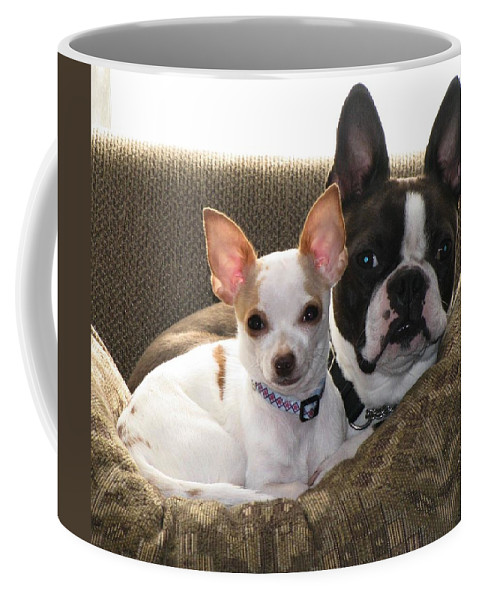 Buddies Coffee Mug featuring the photograph Buddies by Maria Urso