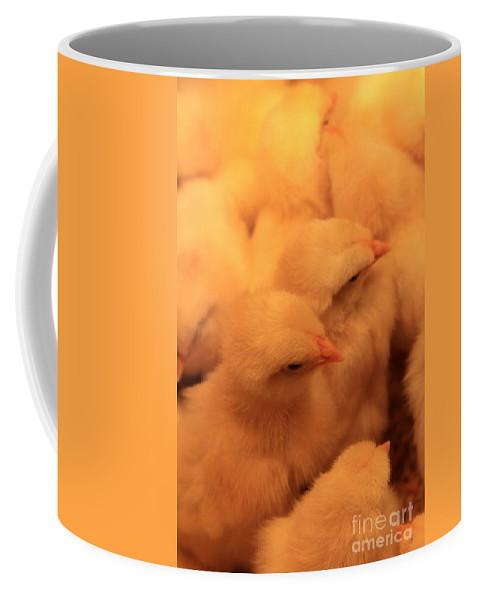 Chicks Coffee Mug featuring the photograph Buddies by Rick Rauzi