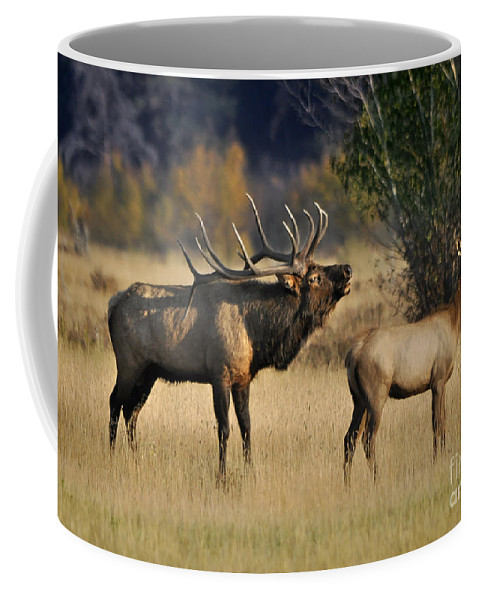 Nature Coffee Mug featuring the photograph Bugling Elk With Calf by Nava Thompson