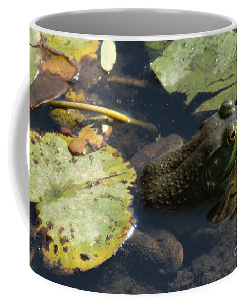 Frog Coffee Mug featuring the photograph Bull Frog by Kenny Glotfelty