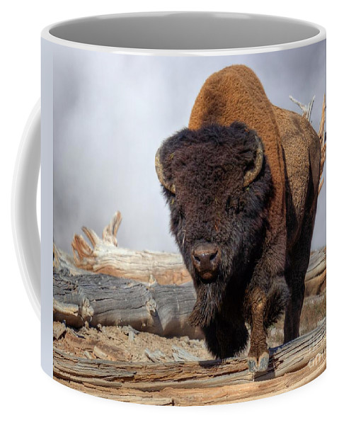 Bison Near The Mud Volcano. Hayden Valley Coffee Mug featuring the photograph Bull Strut by James Anderson