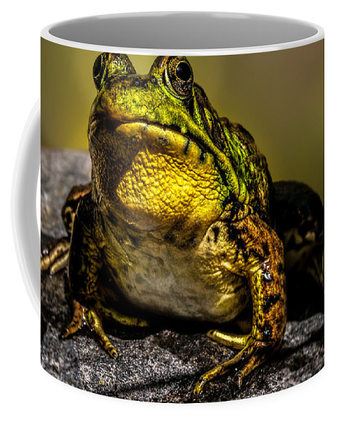 Frog Coffee Mug featuring the photograph Bullfrog Watching by Bob Orsillo