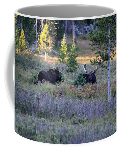 Bull Coffee Mug featuring the photograph Bulls In The Meadow by Shane Bechler
