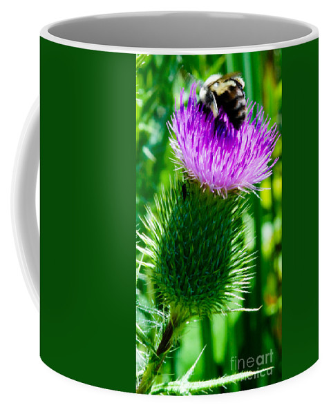 Bumble Bee Coffee Mug featuring the photograph Bumble Bee On Bull Thistle Plant by Optical Playground By MP Ray