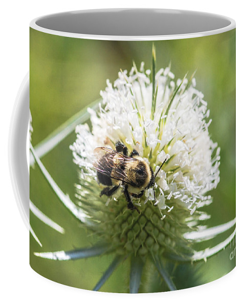 Bumble Bee Coffee Mug featuring the photograph Bumble Bee On Button Bush Flower by Optical Playground By MP Ray