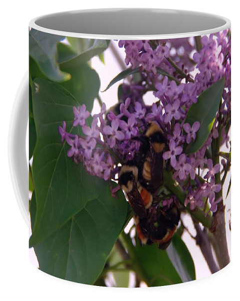 Bees Coffee Mug featuring the photograph Bumble Bees In Flowers by Jeff Swan