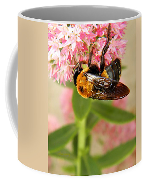 Insect Coffee Mug featuring the photograph Bumblebee Clinging To Sedum by Chris Berry