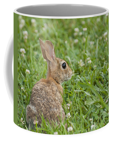 Rabbit Coffee Mug featuring the photograph Bunny Rabbit In The Clover by Deb Breton