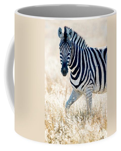 Photography Coffee Mug featuring the photograph Burchells Zebra Equus Quagga by Panoramic Images