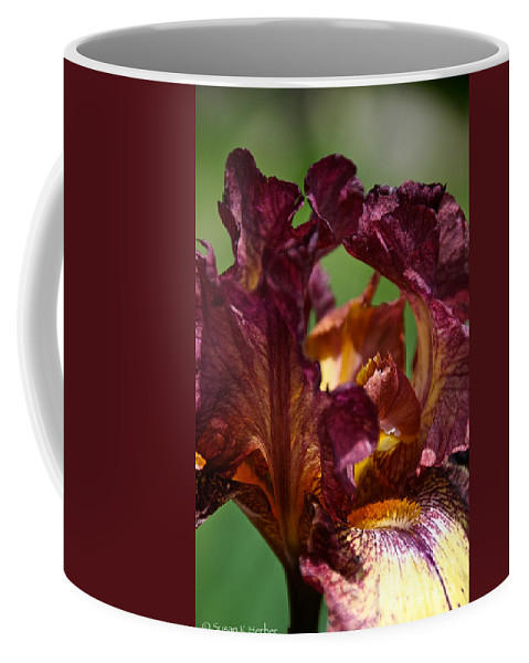 Flower Coffee Mug featuring the photograph Burgundy Blossom by Susan Herber