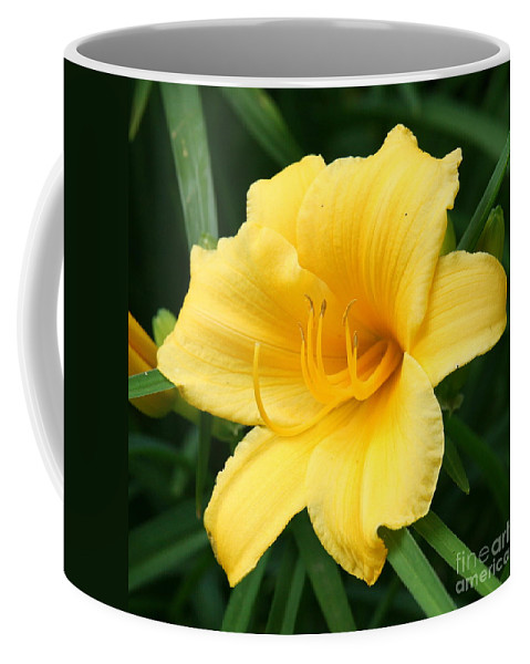 Flower Photography Coffee Mug featuring the photograph Bursting Lily by Neal Eslinger