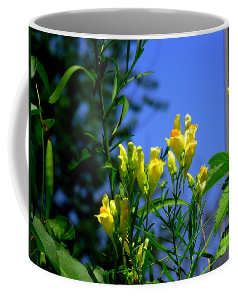 Butter And Egg Flower Coffee Mug featuring the photograph Butter And Egg Wildflower by CapeScapes Fine Art Photography