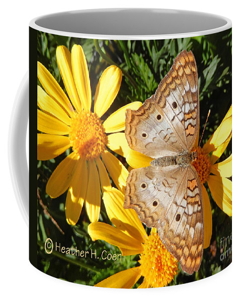 Heather Coen Coffee Mug featuring the photograph Butterfly And Daisies by Heather Coen