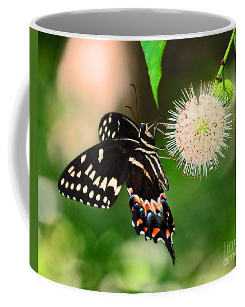 Ball Flower Coffee Mug featuring the photograph Butterfllies And The Crystal Balls by Davids Digits
