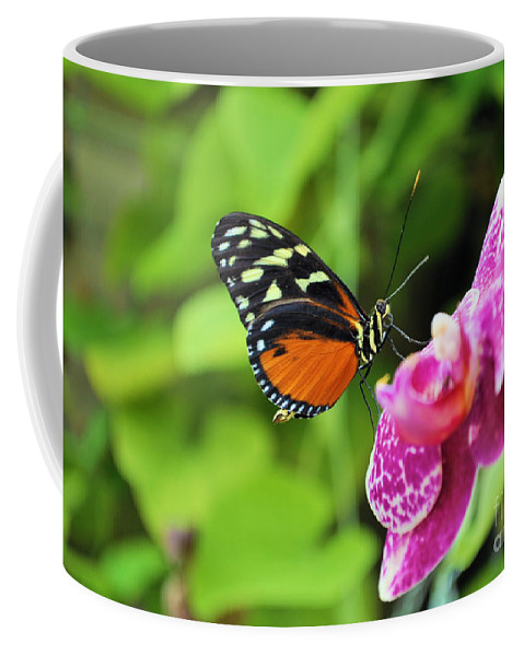 Butterfly Coffee Mug featuring the photograph Butterfly by Matthew Naiden