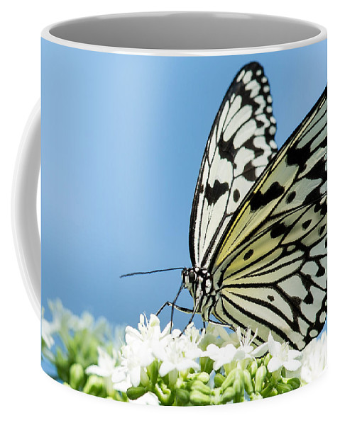 Albert Ginter Botantical Gardens Coffee Mug featuring the photograph Butterfly On Blue by Cindy Archbell