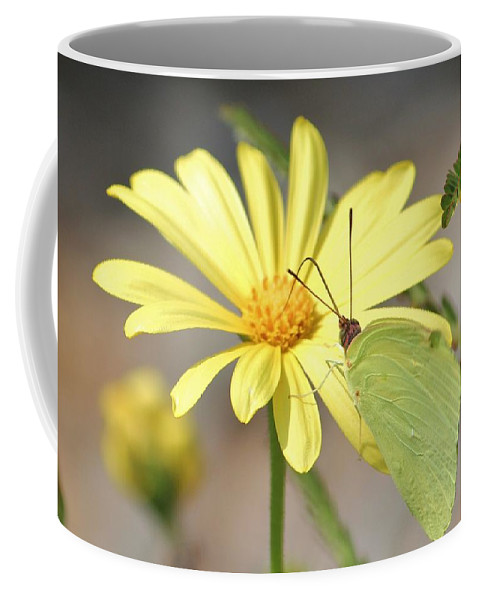 Butterfly Coffee Mug featuring the photograph Butterfly On Daisy by Cynthia Guinn