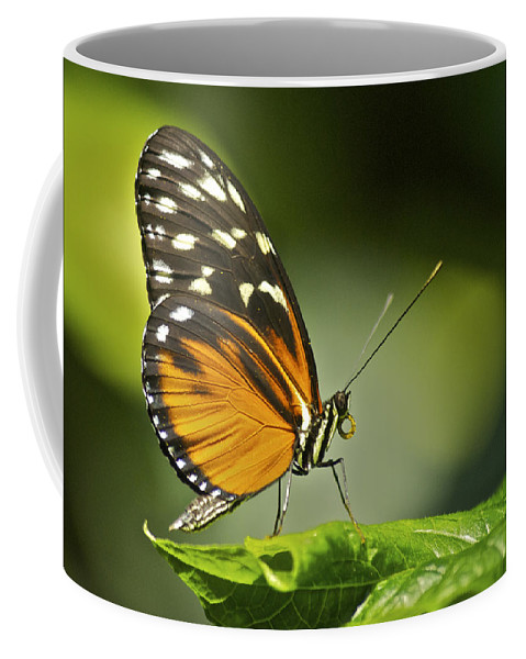 Butterfly Coffee Mug featuring the photograph Butterfly Profile by Michael Peychich
