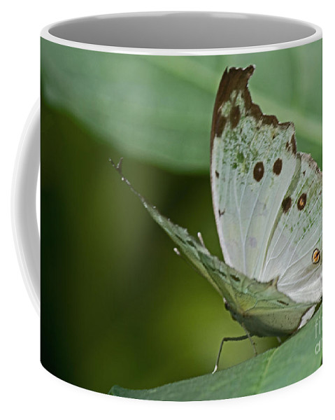 Sandra Clark Coffee Mug featuring the photograph Butterfly Ready For Take Off by Sandra Clark