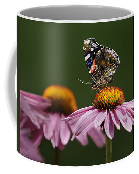 Lepidoptera Nymphalidae Coffee Mug featuring the photograph Butterfly Red Admiral On Echinacea by Peter v Quenter