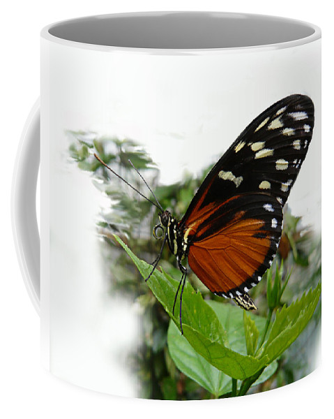 Butterfly Coffee Mug featuring the photograph Butterfly by Tom Conway