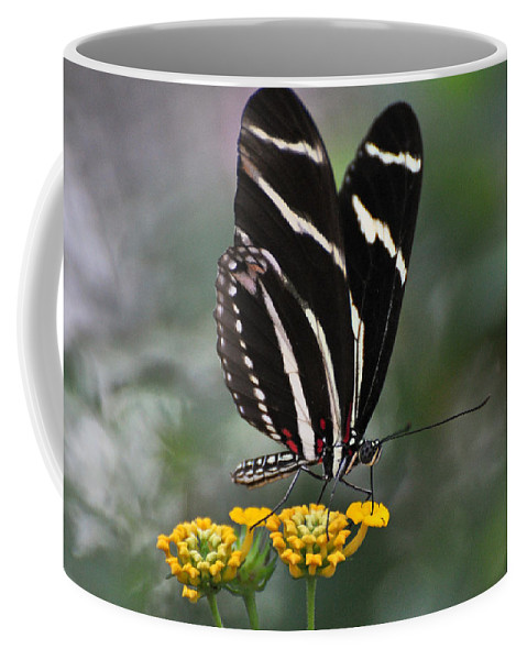 Butterfly Coffee Mug featuring the photograph Butterly by Savannah Gibbs