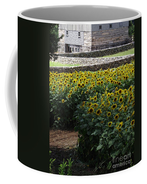 Buttonwood Farm Coffee Mug featuring the photograph Buttonwood by Michelle Welles