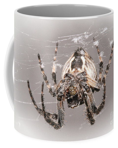 Spiders Coffee Mug featuring the photograph By A Thread by Geoff Crego