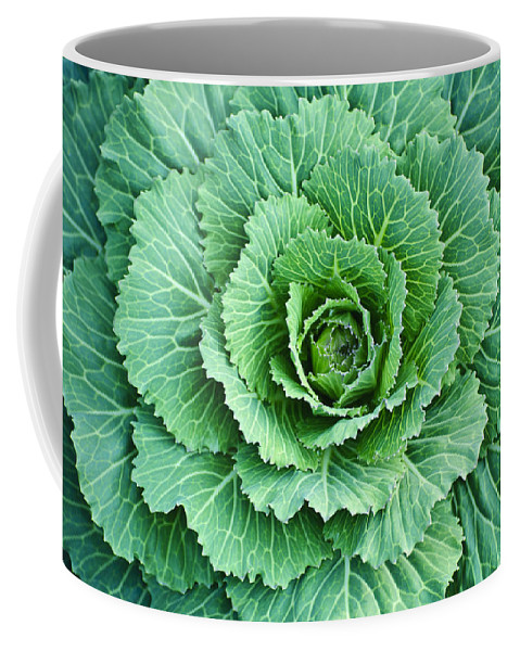 Cabbage Coffee Mug featuring the photograph Cabbage Leaves by Diego Re