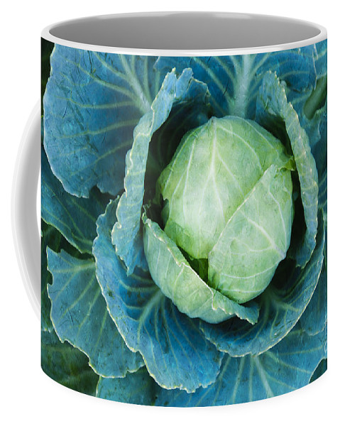 Cabbage Coffee Mug featuring the photograph Cabbage Painterly by Andee Design