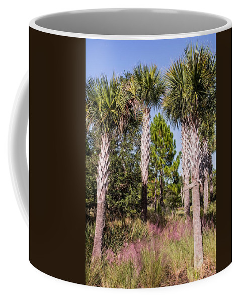 Palms Coffee Mug featuring the photograph Cabbage Palm by Zina Stromberg